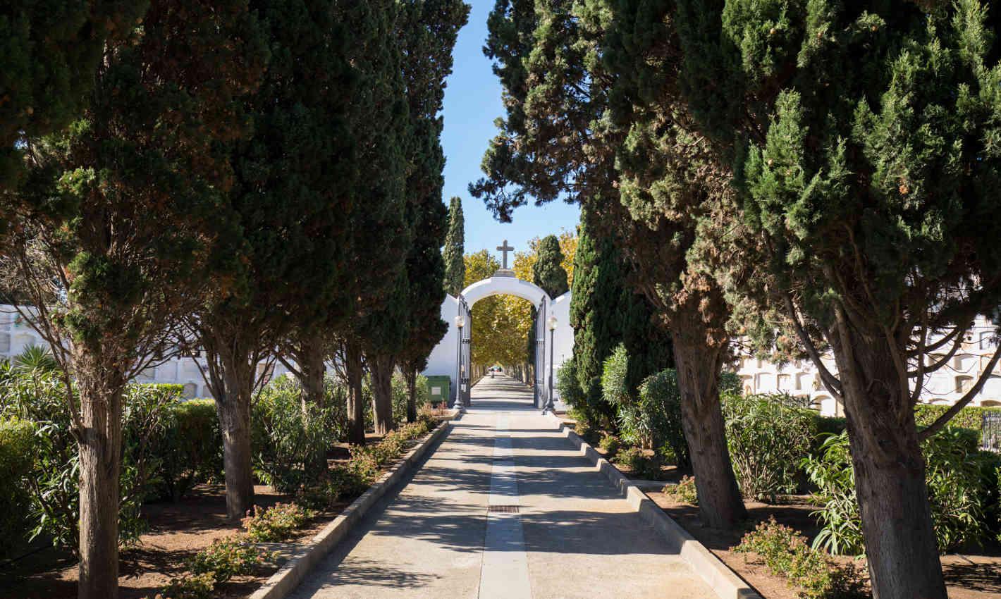 Arbres al Cementiri Vell de Calella